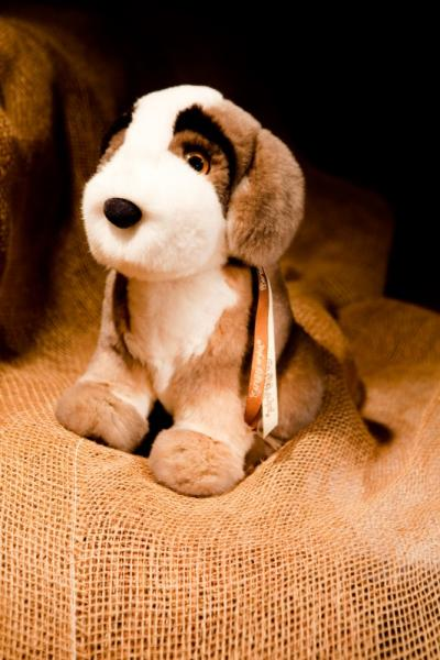 Собака сенбернар, цвет натуральный пепельно-серый