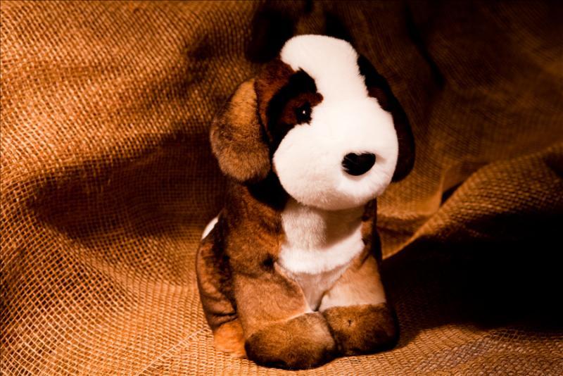 Собака сенбернар, цвет натуральный коричневый